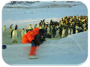 "Jerome films ""March of the Penguins"""